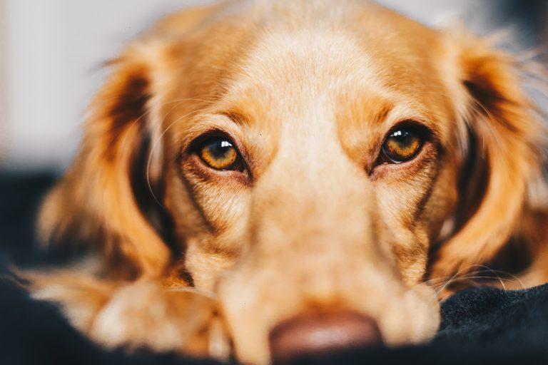 beneficios-animal-estimação